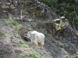 Kamloops, Salmon Arm, Big White 045