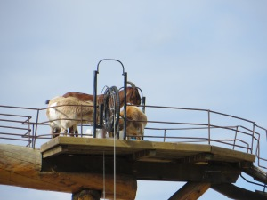Kamloops, Salmon Arm, Big White 083