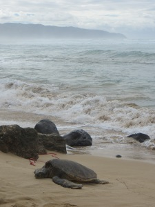 Oahu 012