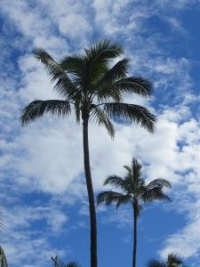 Oahu 016
