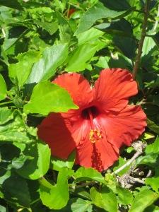 Oahu 026